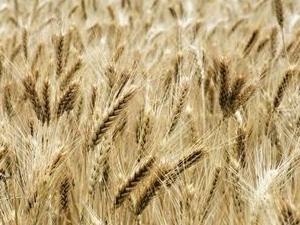Lietuvių startuolis mažina taršą ir trečdaliu didina derlių
